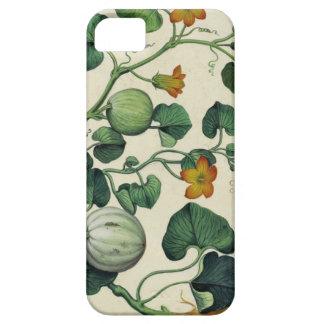 Pumpkins Squash Vintage Botanical Print iPhone 5 Cover