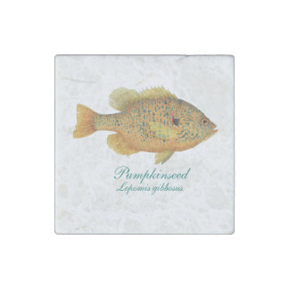 Pumpkinseed magnet stone magnet