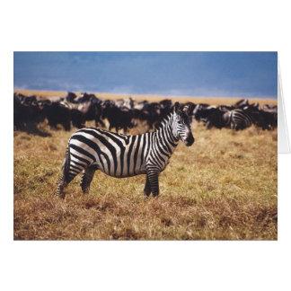 Pundamilia (Zebra) Greeting Cards