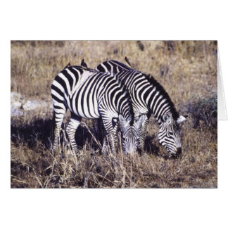 Pundamilia (Zebra) Pair Card