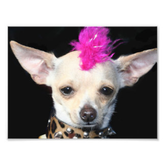 Punk Rock Chihuahua Photo Print