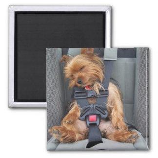 pup seatbelt square magnet