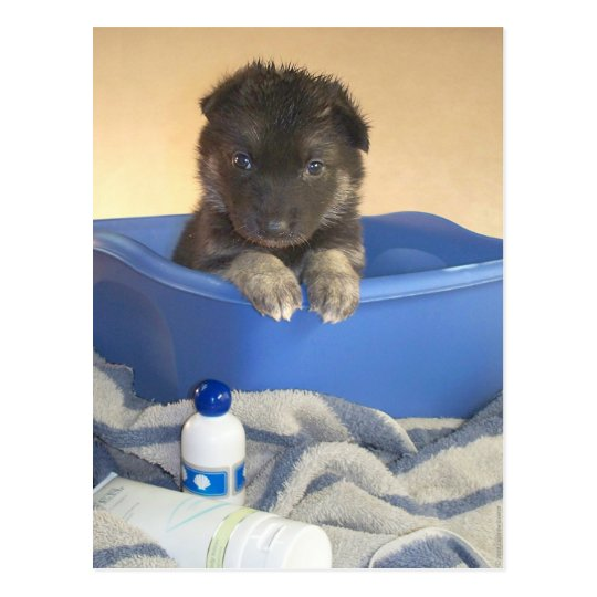 Puppies Bath Time Postcard