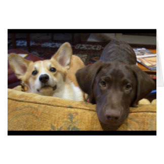 Puppies caught on the sofa greeting card