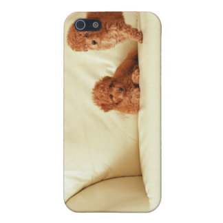 Puppies On The Sofa iPhone 5/5S Cases