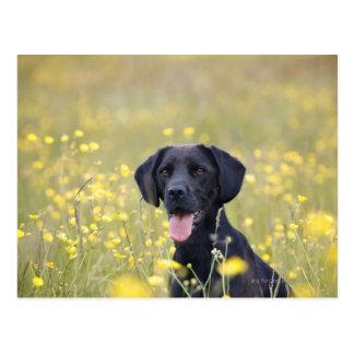 Puppy 16 Months 2 Postcard