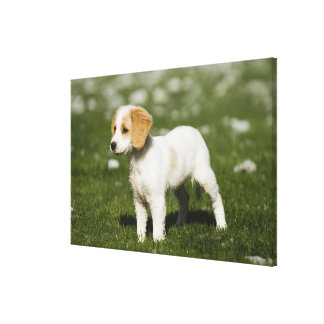 Puppy 3 stretched canvas print