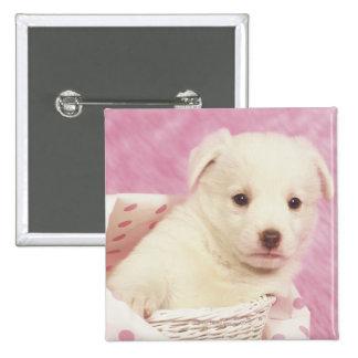 Puppy 5 15 cm square badge