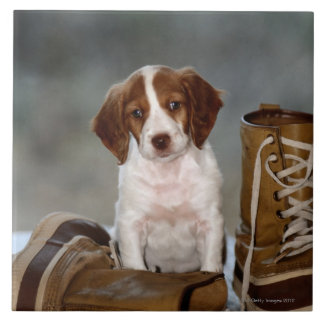 Puppy and Boots Tile