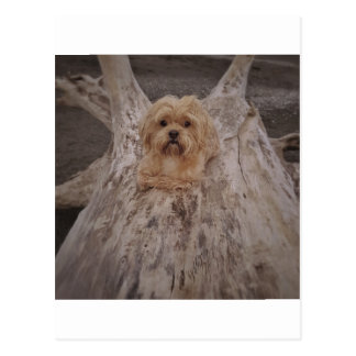 Puppy at the Ocean Post Card