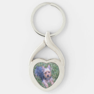 puppy australian silky terrier laying key ring