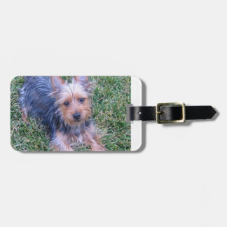 puppy australian silky terrier laying.png luggage tag