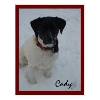 puppy, Cady Postcard
