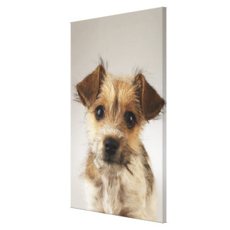 Puppy (Canis familiaris) 2 Stretched Canvas Print