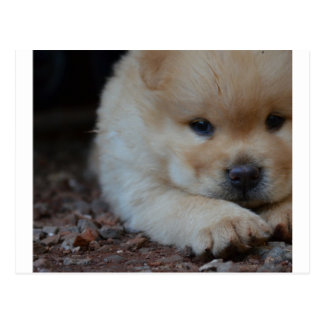 puppy chow chow.png postcard