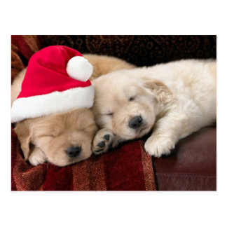 Puppy Christmas Postcard