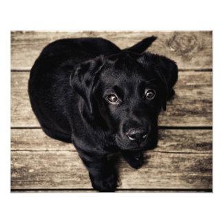 Puppy dog love photo print