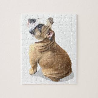 puppy english bulldog puppy puzzle