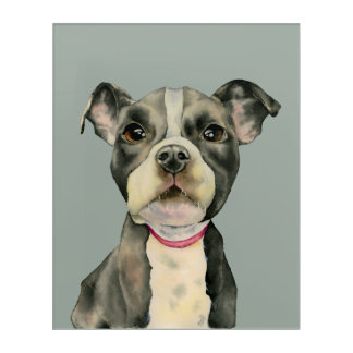 """Puppy Eyes"" Pit Bull Dog Watercolor Painting Acrylic Wall Art"