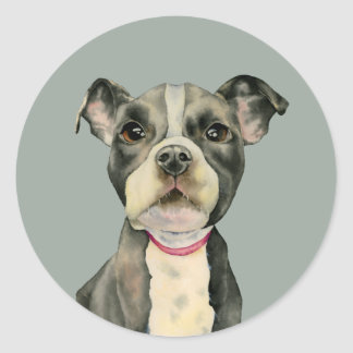 """""""Puppy Eyes"""" Pit Bull Dog Watercolor Painting Classic Round Sticker"""