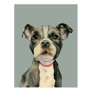 """Puppy Eyes"" Pit Bull Dog Watercolor Painting Postcard"