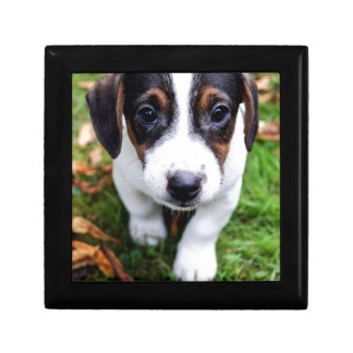 puppy gift box