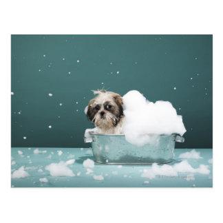 Puppy in foam bath postcard