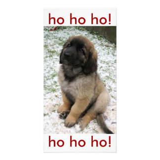 Puppy in the snow custom photo card