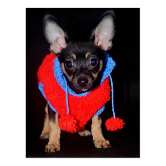 Puppy in Wooly Sweater Postcard