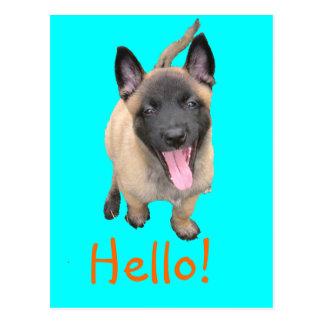 puppy malinois postcard