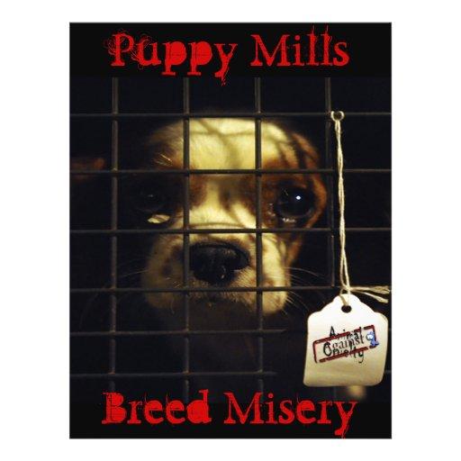 Puppy Mills Flyer