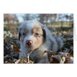 Puppy Note Card