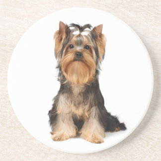 Puppy of the Yorkshire Terrier Drink Coasters