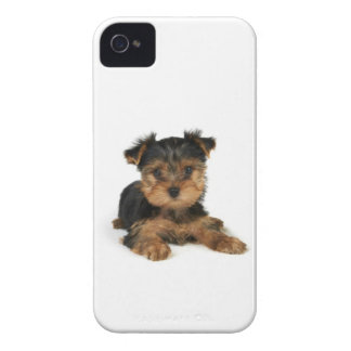 Puppy of the Yorkshire Terrier iPhone 4 Cover
