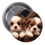 Puppy Pictures Pin