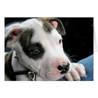 Puppy Pit Bull T-Bone Card