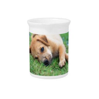 puppy pitcher