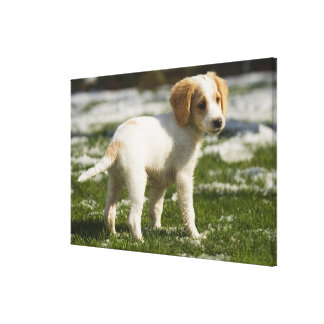 Puppy playing in the snow stretched canvas prints