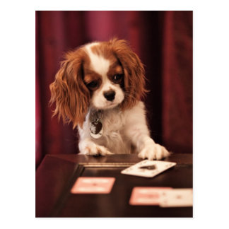 Puppy plays with cards on coffee table. postcard