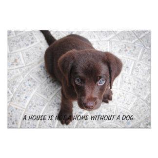 Puppy Quote Art Photo