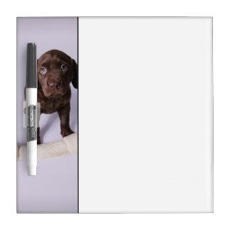 Puppy Sitting by a Bone Dry Erase Board