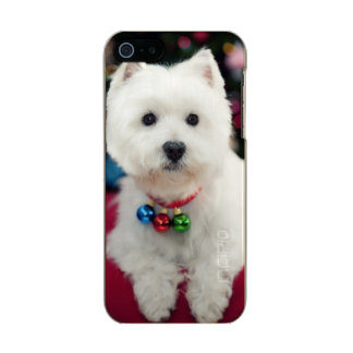 Puppy wearing Christmas bell on neck Incipio Feather® Shine iPhone 5 Case