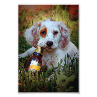 Puppy With Beer Bottle Photo Print