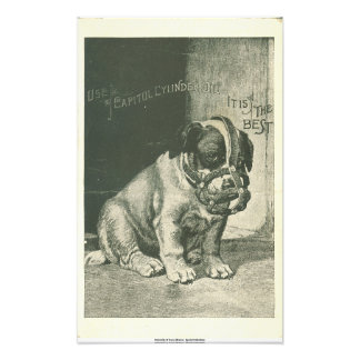 Puppy with Muzzle Ephemera Photo Print