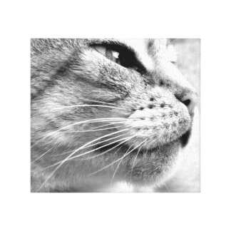 Pur-fect Molly Canvas Print
