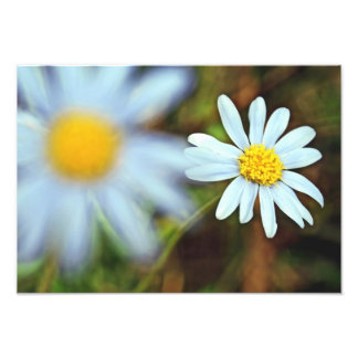 """Pure and Innocent Daisies"" Photo Prints"