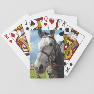 Pure breed horse playing cards