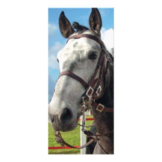 Pure breed horse rack card