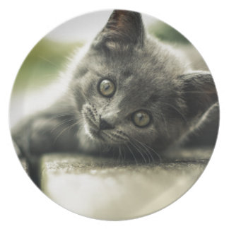 Pure Gray Kitten Plate