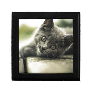 Pure Gray Kitten Small Square Gift Box